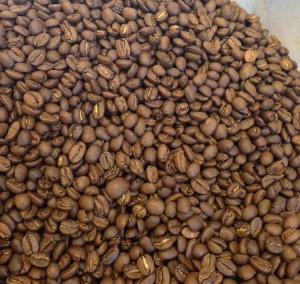 Our Colombia coffee one day off the roast. Note the dry appearance of the coffee: no oils in sight.